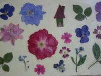 リラックス押し花教室